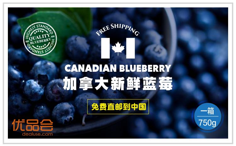 第二批加拿大新鲜蓝莓直邮中国团购
